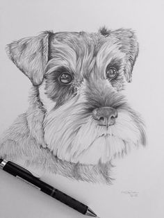 """Excellent """"schnauzer dogs"""" information is readily available on our website. Have a look and you wont be sorry you did. Schnauzer Noir, Schnauzer Art, Miniature Schnauzer, Animal Sketches, Animal Drawings, Art Sketches, Outline Drawings, Art Drawings, Drawings Of Dogs"""