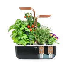 Smart Garden, Home And Garden, Vegetables For Babies, Aromatic Herbs, Self Watering, Edible Flowers, Flower Pots, Planter Pots, Indoor