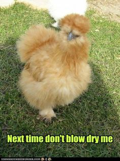 Animal Capshunz - Page 4 - All of the Internet's Animals. Captioned - Funny Animal Captions - Cheezburger
