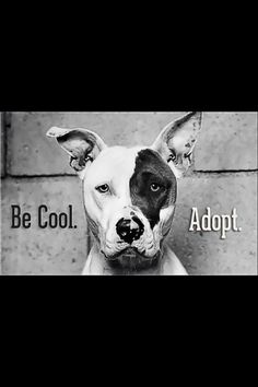 Be awesome and ADOPT!! Don't support pet shops, puppy mills or breeders. Adopt from your local shelter or rescue organization - it is the right choice!!!!