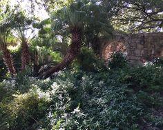 Alamo garden, San Antonio, Texas.