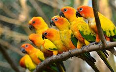 Peafeather Vector Ile Ilgili Gorsel Sonucu Bird Wings Hd Wallpaper Parrot Wallpaper