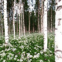 #kesä #iisalmi #finland #iidensalmi #summer #sommar
