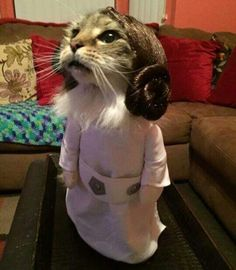 Help me, Kitty Wan...you're my only hope.