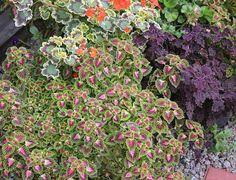 Тринадцать цветников Юрия Марковского