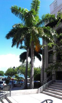 Puerto Rico, Old San Juan and El Yunque. Old San Juan, San Juan Puerto Rico, Historical Sites, Caribbean, Sidewalk, Tropical, Eat, Blog, Travel