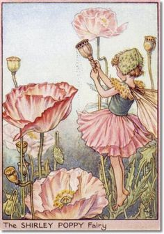 Cicely Mary Barker - Flower Fairies of the Garden - The Shirley Poppy Fairy Archival Fine Art Paper Print