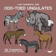 I Am Thankful For Odd-Toed Ungulates by PepomintNarwhal Fun Facts About Animals, Animal Facts, Reptiles And Amphibians, Mammals, Types Of Crocodiles, Animals And Pets, Cute Animals, Animal Science, Curious Creatures