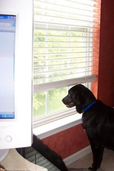 How To Stop Dog Barking In 3 Easy Steps… This Is What Worked For Us!