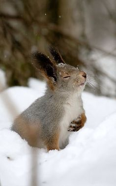 Majestic squirrel