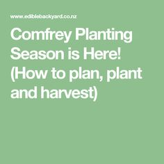 Comfrey Planting Season is Here! (How to plan, plant and harvest)