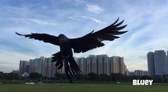 Turning and braking! #hyacinthmacaw #parrots #macaws #loro #guacamaya #papagaio #papegøje #papegaai #papagei #pappagalli #papuga #Попугаи #papağan #鸚鵡  #affinityflight #parrot #macaw #guacamayo #arara #perroquet #papagaj #pappagallo #papegøye #Попугай #papegoja #ببغاء #オウム#앵무새 #طوطی #flyingparrots #freeflyingparrots