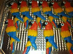 Parrots for margaritaville.
