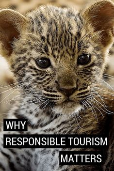 Responsible tourism, giving-back from your travels, eco this and eco that, all tend to be buzz words in the safari industry at the moment. Does any of it really matter? Click here to find out: https://www.safaribookings.com/blog/321 #safari #SafariBookings