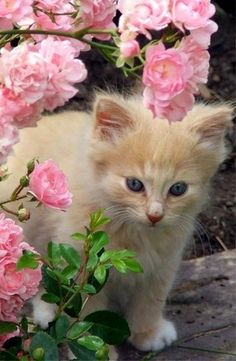 Cute little kitty in a flower garden...