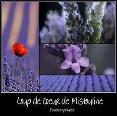 https://www.facebook.com/pages/Mistoulin-et-Mistouline-en-Provence/384825751531072