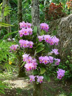 A Collection of Photos: Orchids Orchids Garden, Orchid Plants, Garden Plants, Exotic Flowers, Pink Flowers, Beautiful Flowers, Plantas Bonsai, Blossom Garden, Beach Wedding Centerpieces
