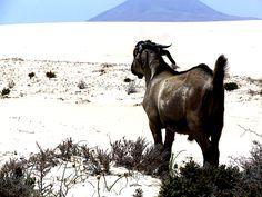 un simbolo ;) Fuerteventura