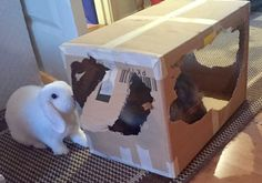 12/1/17 .... OUR BOX MUST BE «READY» (DESTROYED) (BE)FOR(E)   CHRISTMAS.... WORKING ON IT.....!! Duncan on D&D by Inger Johanne :)