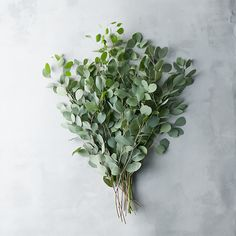 "Uniquely-shaped leaves and a distinctive, silver-green hue make this fresh eucalyptus bunch one of our favorite accents for the holiday home.- Fresh silver dollar eucalyptus- Indoor or sheltered outdoor use- For best longevity, mist regularly and keep away from heat when used indoors- Natural stems; slight variance in color and shape may occur- USAApproximately 20""H, 10"" diameterThis item will begin shipping on 11/14/16. Please note: Orders received after Wednesday at 10A EST will b..."