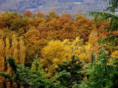 Oggi 29 settembre 2014 su ansa.it nella photogallery dedicata all'autunno è stata pubblicata questa mia foto scattata vicino ad Umbertide (PG) http://www.ansa.it/sito/photogallery/curiosita/2014/09/22/autunno-malinconica-bellezza_bf0a4b25-db98-4296-9edb-50a401b5c113.html