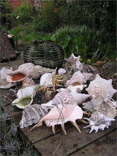 Drifted by Seashells.