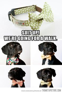 bow ties for your little friend. omg Harley needs this!!!