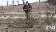 University of Kentucky Blueberry Pruning Demonstration