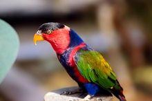Papagos Wallpaper