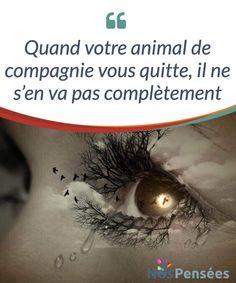 Quand votre animal de compagnie vous quitte, il ne s'en va pas complètement Quand votre animal de compagnie vous quitte, il ne s'en va pas #définitivement. Il sera présent pour #toujours dans vos #souvenirs et dans votre cœur. #Psychologie