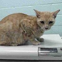 Pet Card Kitten Adoption Cat Adoption Pets