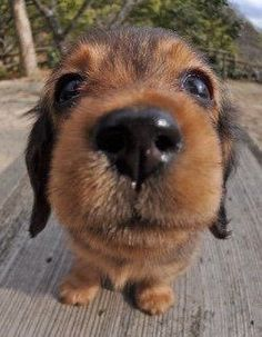 PHOTOS OF PUPPIES TAKEN WITH A FISH-EYE LENS...