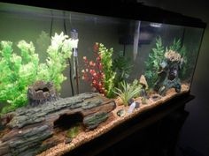 Learn the easy way to change the water in your freshwater aquarium to avoid spilling, and ensure sure your fish stay happy and healthy! How to Change the Water in Your Freshwater Aquarium the Easy Way Wendi Garay Fish Learn the easy way Aquarium Algae, Aquarium Terrarium, Aquarium Setup, Aquarium Design, Saltwater Aquarium, Aquarium Fish Tank, Planted Aquarium, Freshwater Aquarium, Animals