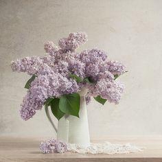 Lilac I by Justysiak.deviantart.com on @deviantART