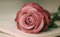 Rose Confidentiel
