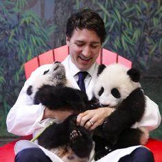 Justin Trudeau greets panda cubs on their naming day.: Justin Trudeau greets panda cubs on their naming day Justin Trudeau, Pm Trudeau, Baby Animals, Cute Animals, Baby Pandas, Panda Babies, Wild Animals, Giant Pandas, Red Pandas