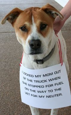 """""""I locked my mom out of the truck when we stopped for fuel on the way to the vet for my neuter.""""  Dog Shaming - Smart dog, bet they missed the appointment!"""