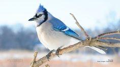 Ces oiseaux sont beaux