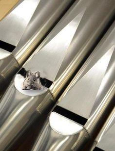 Un rato no tubo en O Moucho, Ourense expo exposición fotografía órgano