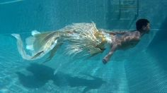 """Angel merman tail"" Thai merman (10/06/2016) พริ้วไสว สวยงามกับสีขาวมุขและทอง เสน่ห์แห่งปลากัดไทย ปลาทอง ฯลฯ คุณคิดอย่างไร? เสนอแนะได้นะครับ ปล.หางครั้งนี้ว่ายยากกว่าครั้งก่อนเยอะมากแต่ก็สวยมากๆเช่นกันครับ  #angelmerman #thaimerman #thailandmerman #goldfish #merman #mermanworld #swimingpools #swiming #lover #farahsunamun #farahsunamunfanpage #mydreamcometrue #bangkok Diy Mermaid Tail, Silicone Mermaid Tails, Mermaid Man, Realistic Mermaid Tails, Real Mermaids, Mermaids And Mermen, Pretty Mermaids, Magical Creatures, Fantasy Creatures"