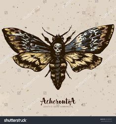 Death's-head hawkmoth. Hand drawn vector ink illustration in trendy engraved style. Moth design tattoo sketch. Vintage drawing for t-shirt print, poster, coloring book.