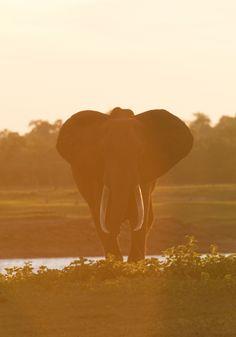 Elephant in Kariba, Zimbabwe