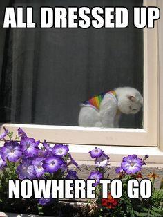 Ohhhhh my gosh! cats