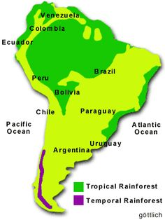 causes and solutions for deforestation in the amazon basin of south america The issues surrounding the amazon causes, effects and solutions for the amazon destruction of the amazon rainforest essay - in south america lies the.