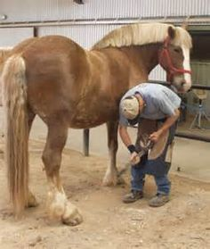 farrier - Bing Images