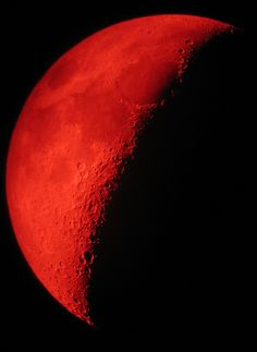 """tulipnight: """" …And the moon turned to blood. Revelation 6:12 by Stevie Steve Steven on Flickr. """""""