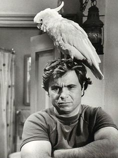 Actor Robert Blake turns 82 today - he was born in Here he is with his cockatoo, Fred on his TV series Baretta. My Childhood Memories, Great Memories, Movies Showing, Movies And Tv Shows, Tv Retro, Old Shows, Vintage Tv, Classic Tv, The Good Old Days