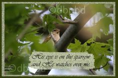 His eye is on the sparrow by dbalsavich on Etsy