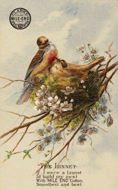 *The Graphics Fairy LLC*: Pretty Birds with Nest Image - Thread Trade Card Vintage Ephemera, Vintage Postcards, Vintage Ads, Pretty Birds, Beautiful Birds, Beautiful Images, Christmas Gift Clip Art, Birds Nest Image, Nest Images