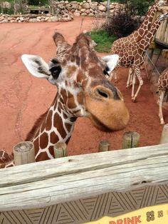 """""""This zoo is in the most beautiful setting of any I've ever been in. And, there are so many opportunities for guests to interact with the animals, which was really special. I loved it!"""" - Denise J."""